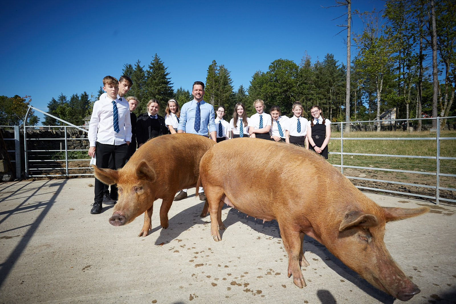 Jimmy Doherty with schoolchildren and rare breed pigs